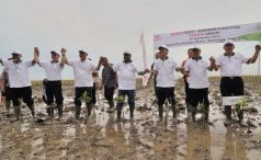 Toyota Forest: Mangrove Plantation at Cipedes, Karawang, on 2013
